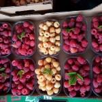 Soiuri de zmeur rentabile în România
